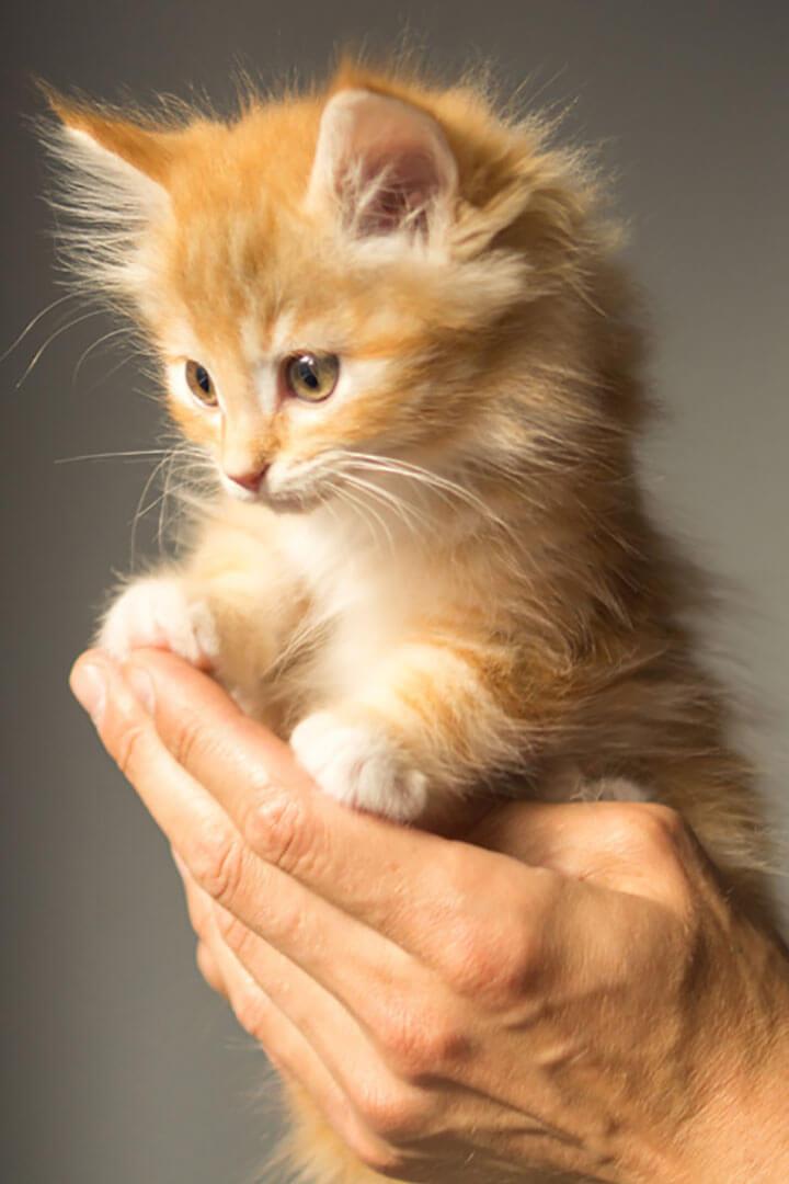手の上の猫 | Fanimal(ファニマル)