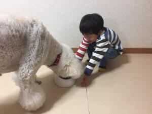 動物たちが子どもにどんな影響を与えるのか? | Fanimal