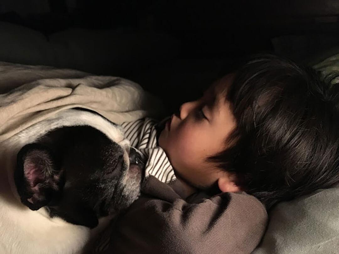 フレンチブルドッグと子供 | Fanimal(ファニマル)