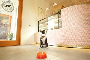 MabbyS Dog Deli の看板犬Abbyちゃん | Fanimal(ファニマル)