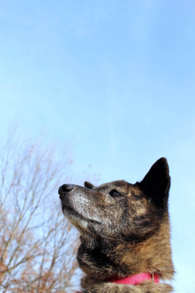 エアペット犬2 | Fanimal(ファニマル)