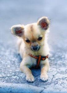 愛犬のために手作りごはんを作りたい | Fanimal(ファニマル)