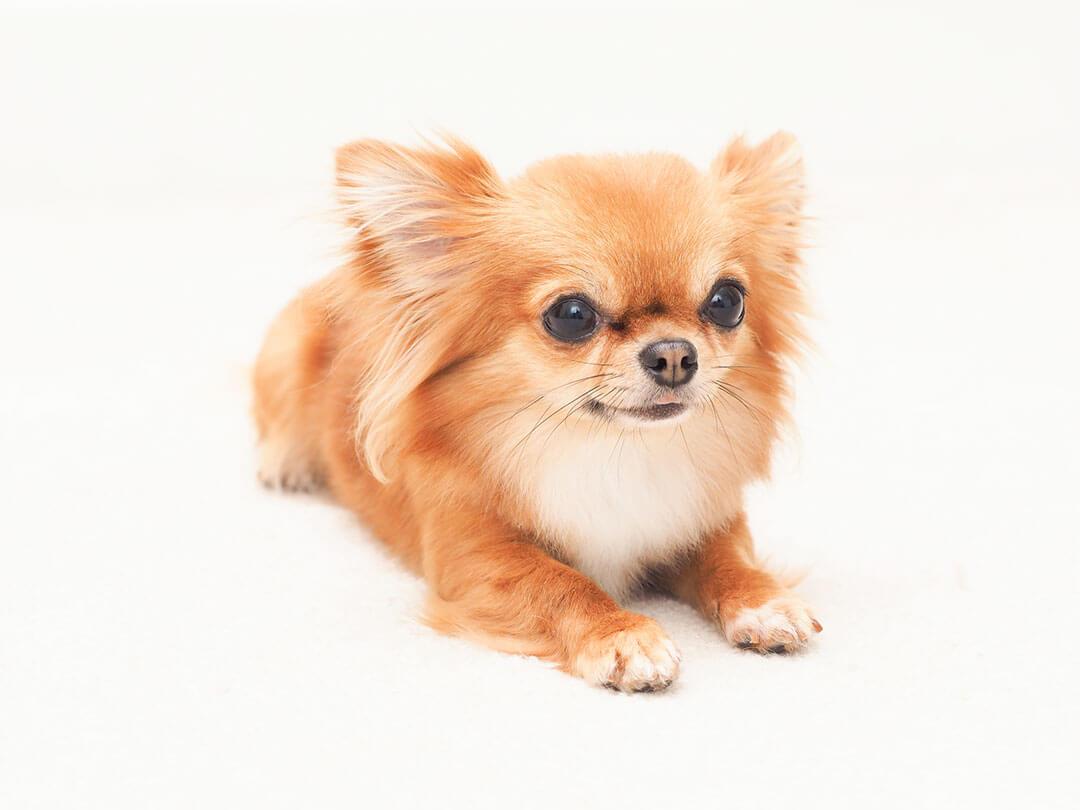 健康な愛犬を目指して | Fanimal(ファニマル)