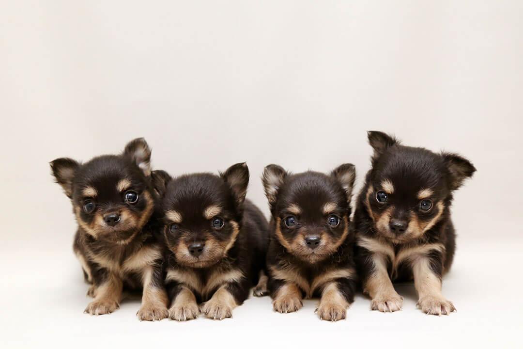 可愛い愛犬たち | Fanimal(ファニマル)