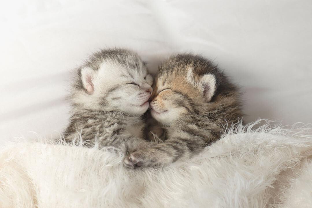 子猫の兄弟 | Fanimal(ファニマル)
