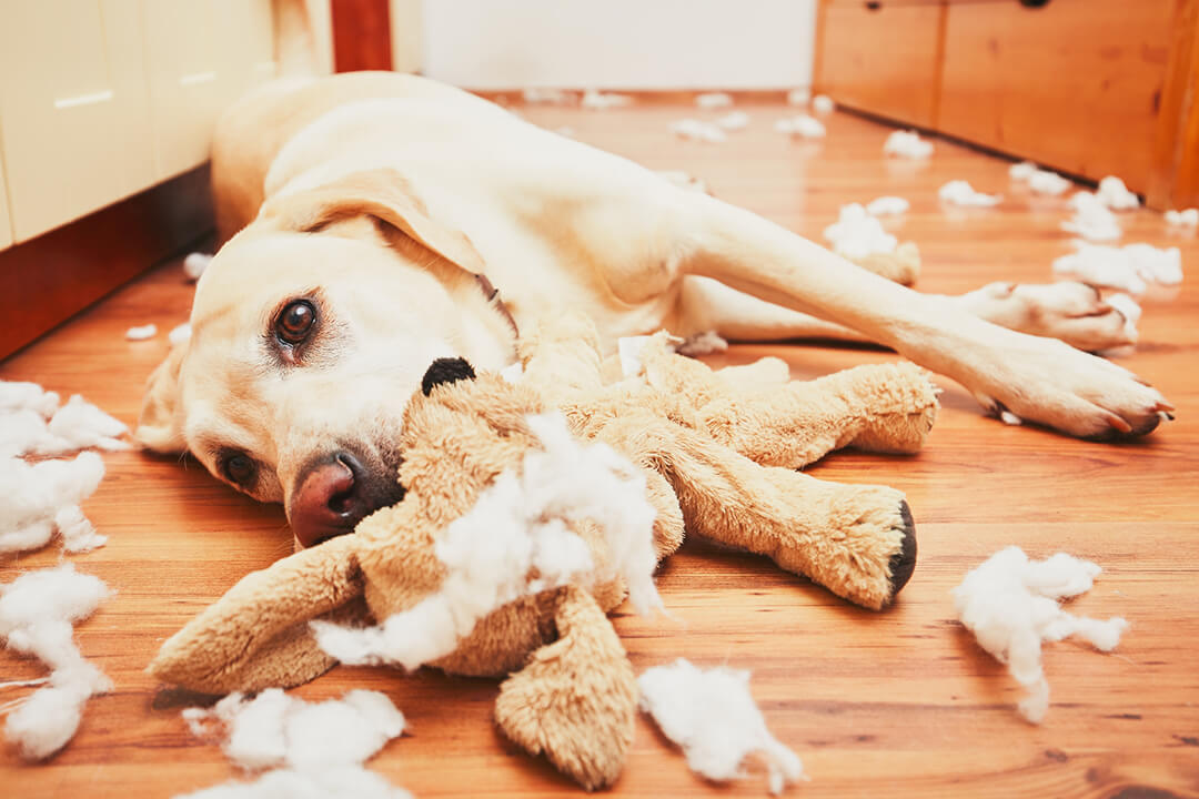 Naughty dog home aloneエアペット4 | Fanimal(ファニマル)
