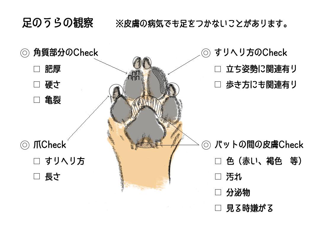 足のうらの観察 | Fanimal(ファニマル)