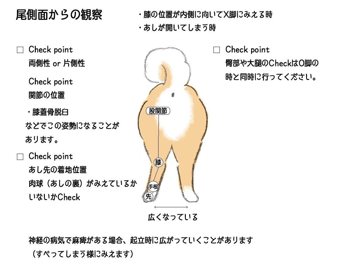 尾側面からの観察 | Fanimal(ファニマル)