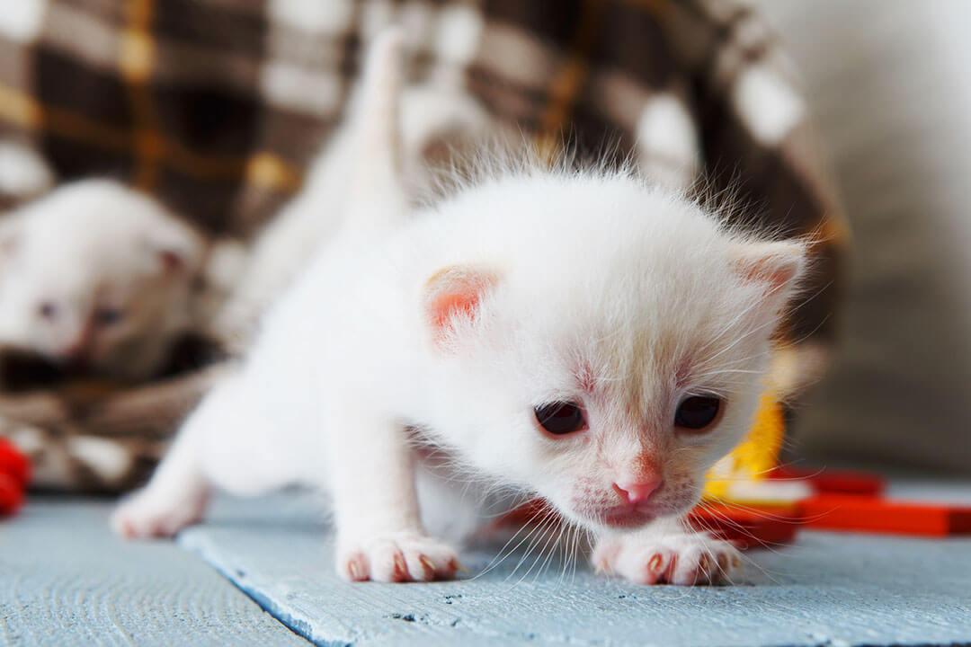 エアペット猫 | Fanimal(ファニマル)
