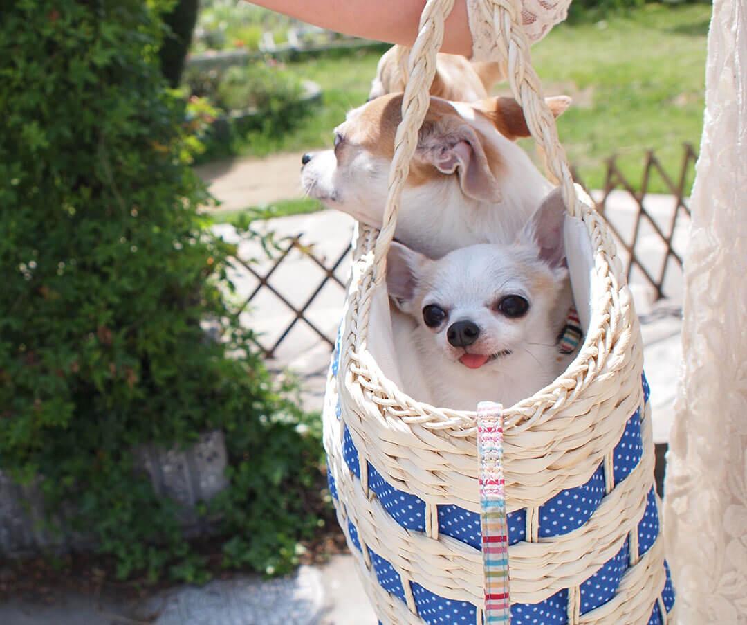 犬と好奇心を連れていく01 | Fanimal(ファニマル)