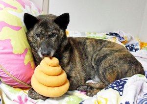 愛犬ジュウザのびっくり事件簿 初詣イメージ1 | Fanimal(ファニマル)