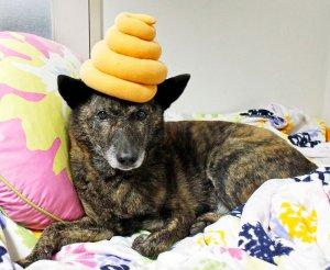 愛犬ジュウザのびっくり事件簿 初詣イメージ2 | Fanimal(ファニマル)