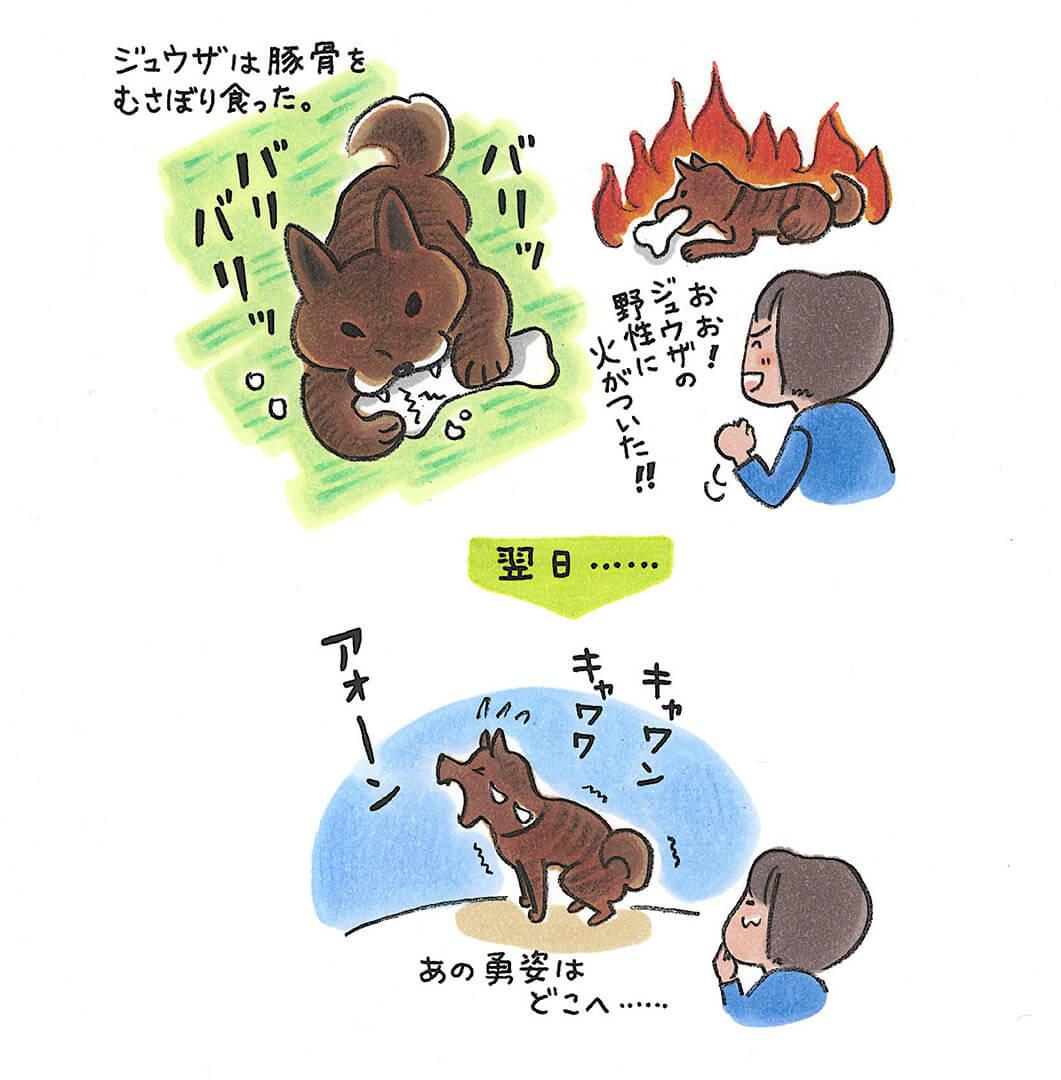 ジュウザ 事件簿イラスト | Fanimal(ファニマル)