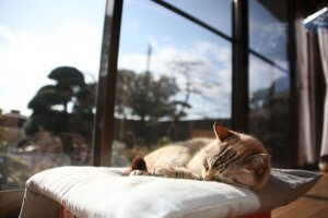 犬と人と-共に生きるVol.4-5 | Fanimal(ファニマル)