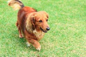 犬と人と-共に生きるVol.4-2 | Fanimal(ファニマル)
