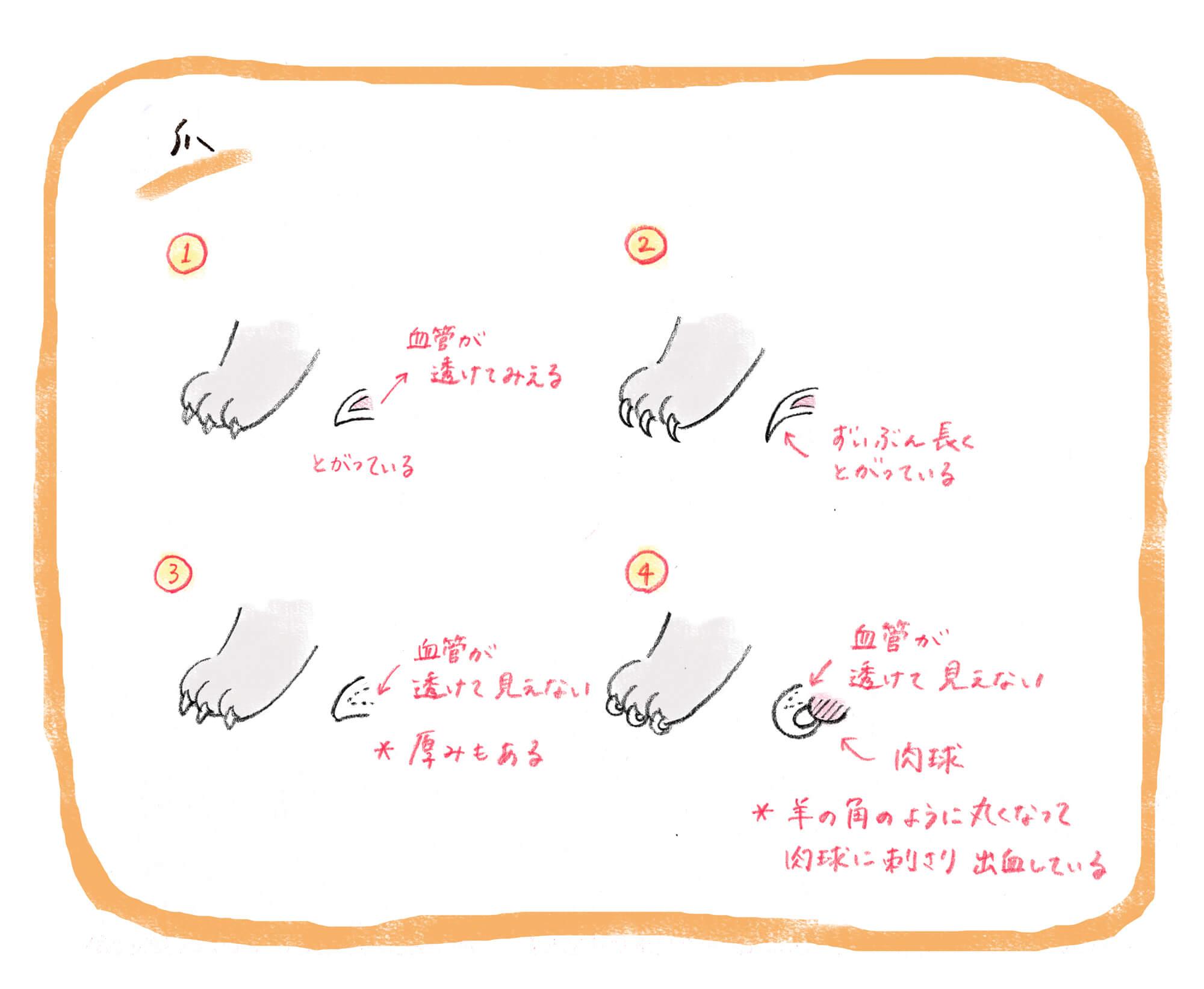 fanimal_0121_爪 | Fanimal(ファニマル)
